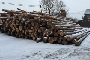 drewno zimowe